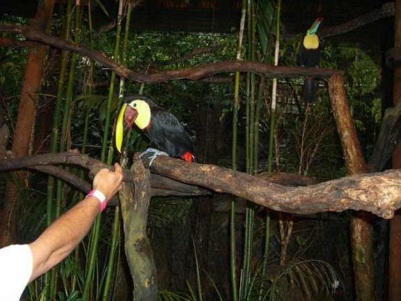 Costa Ricas Nationaltier in Waterfall Gardens