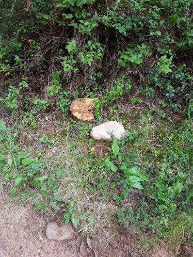 Pilze am Wegesrand