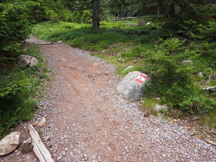 schöner Weg durch den Wald