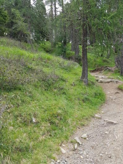 Weg über Wurzeln und Steine durch den Lärchenwald von Grube hinauf zur Stafell
