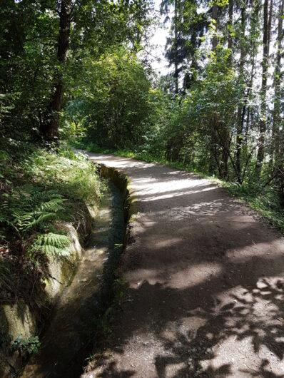 Der Schennwer Waal führt durch Mischwald.