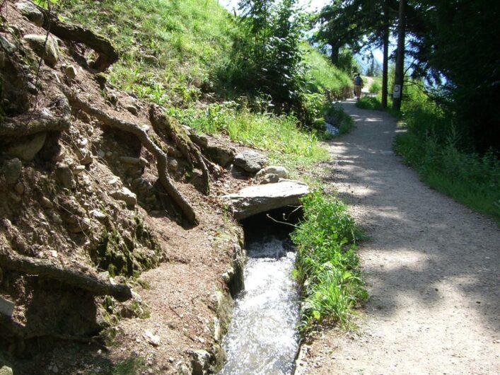 Der Schenner Waalweg am Übergang zwischen Mischenwald und Apfelplantagen