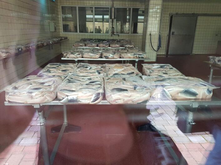 fertigverpackter Fisch in einem Betrieb im Fischereihafen von Bremerhaven