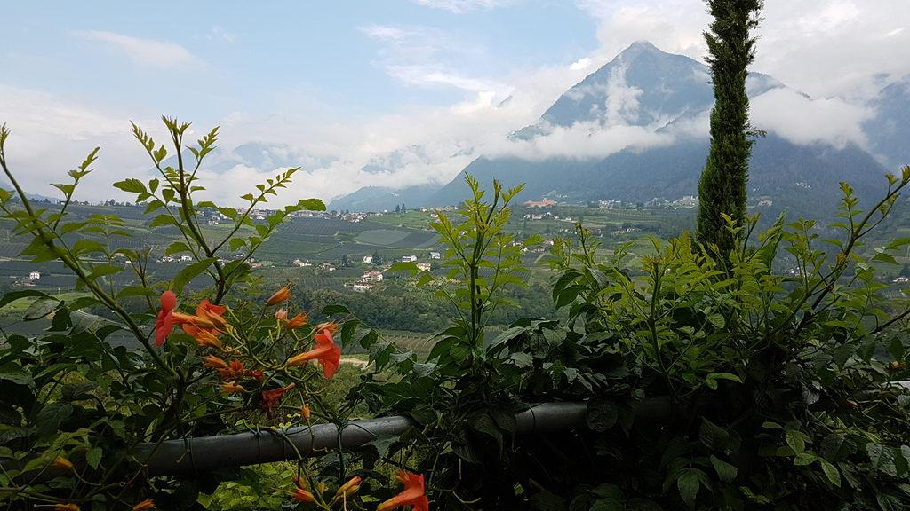 Blick zwischen Blumen und Grün hindurch auf Dorf Tirol und den Hochmuth