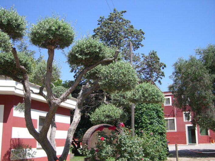 ein Weingut in Apulien