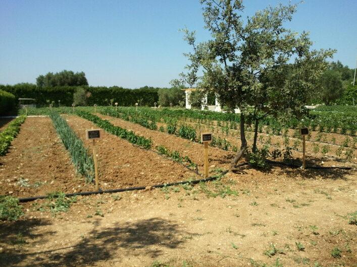 der hauseigene Garten der Tenuta Morena mit Gemüse und Kräutern