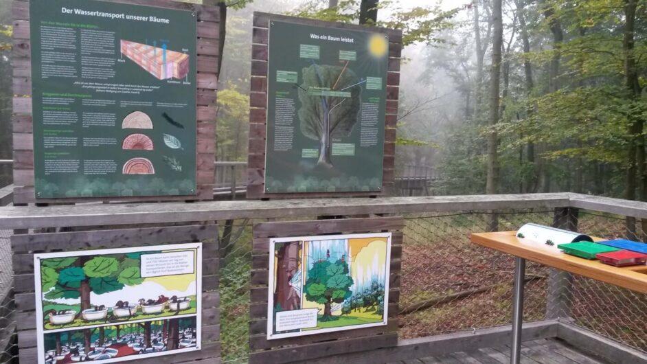 Erklärungen rund um den Wald auf dem Rügener Baumwipfelpfad