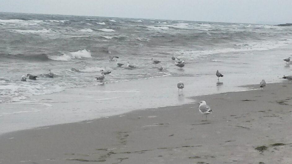 Möwen in den Wellen beim Strandspaziergang