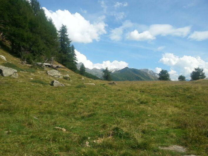 saftige Wiesen und Blick auf die Berge