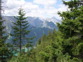 der grün schimmernde Achensee ist durch die Bäume am Rofan hindurch zu sehen