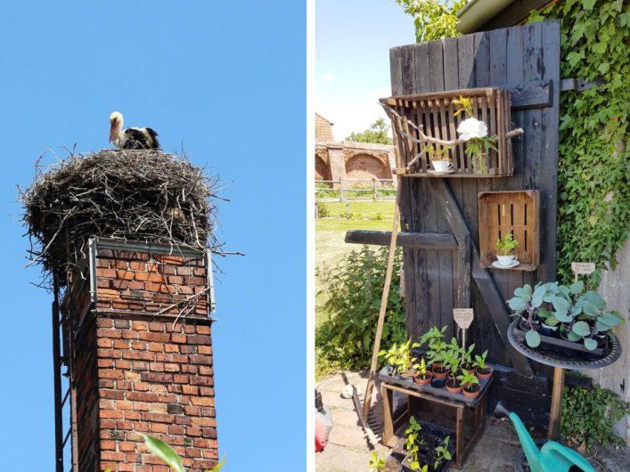 ein Storch im Horst und die Gärtnerei von Kloster Jerichow
