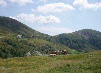 grasende Haflinger auf Meran 2000 und Blick auf die Meraner Hütte