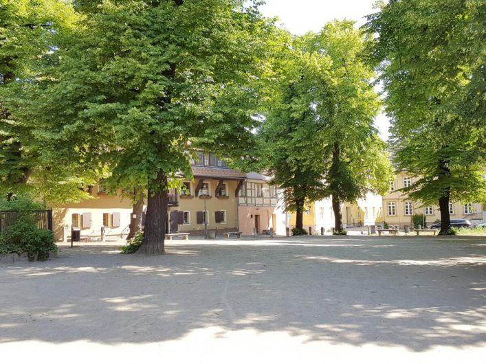 der Klosterplatz in Cottbus mit altem Baumbestand und der Jugendherberge