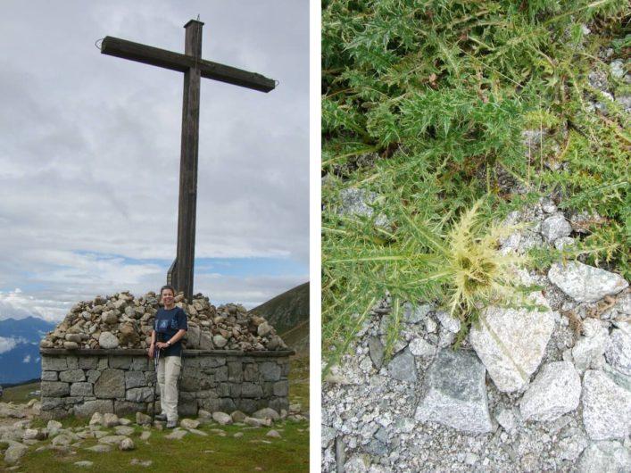 Martina am Kreuz des Missensteinerjochs und Edelweiß