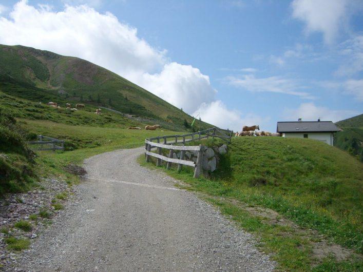 Haflinger rechts und links des Wanderweges vor der Meraner Hütte
