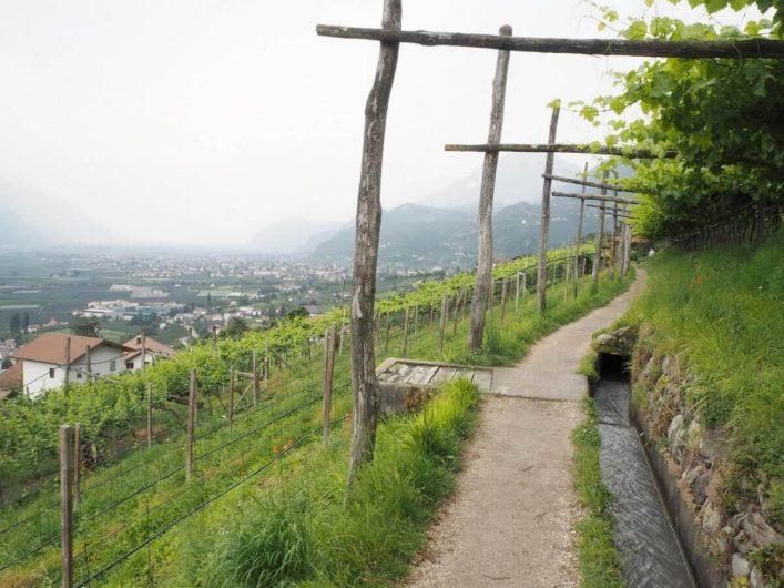 Waal am Marlinger Waalweg fließt zwischen Weinreben hindurch