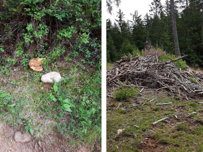 aufgeschichtetes Gehölz und Pilze am Wegesrand