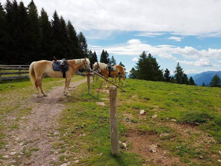 Haflinger einer Reitergruppe an der Wurzer Alm