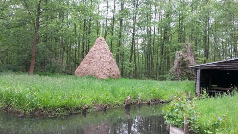 Heuhaufen und alter Baumbestand im Spreewald
