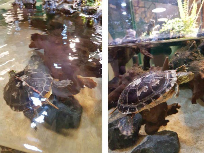 Schildkröten im Universum Bremen