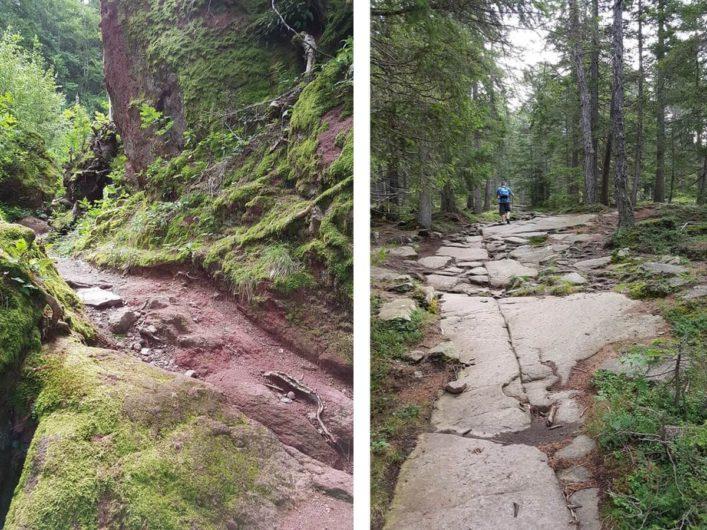 Weg über Steinplatten und Wurzeln auf der Almenrunde in Hafling