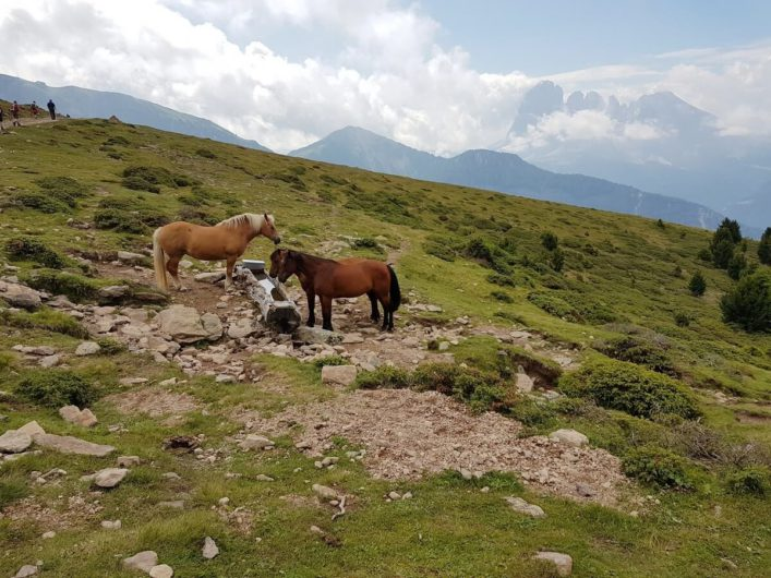 Pferde auf der Alm im Naturpark Puez-Geisler