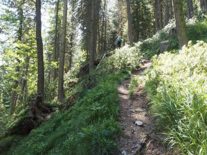 schmaler Wanderweg durch den Wald hinauf zur Ramitzler Schwaige