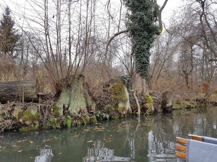 Blick in die winterliche Natur bei der Winterkahnfahrt durch den Spreewald