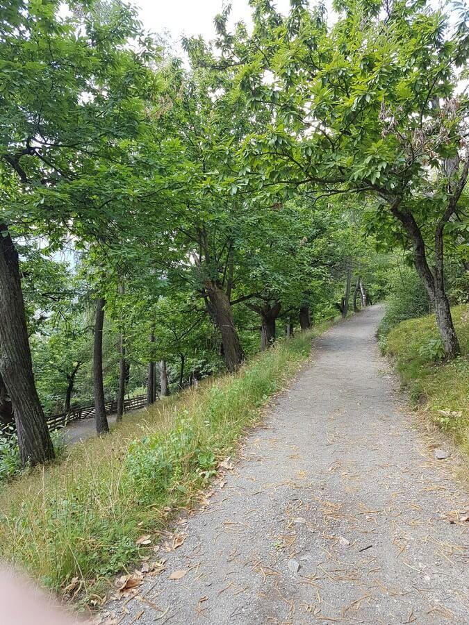 Weg durch Mischwälder