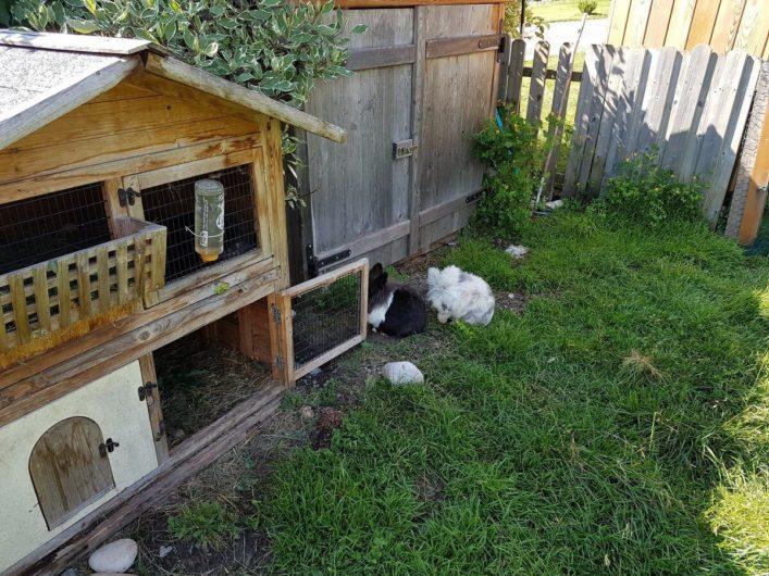 Kaninchen im Außenbereich vom Hotel Gnollhof