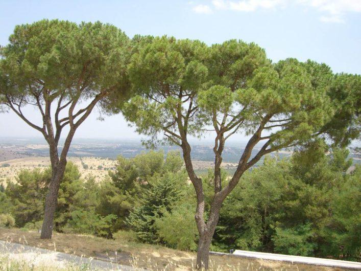 Blick auf die Umgebung von Castel del Monte