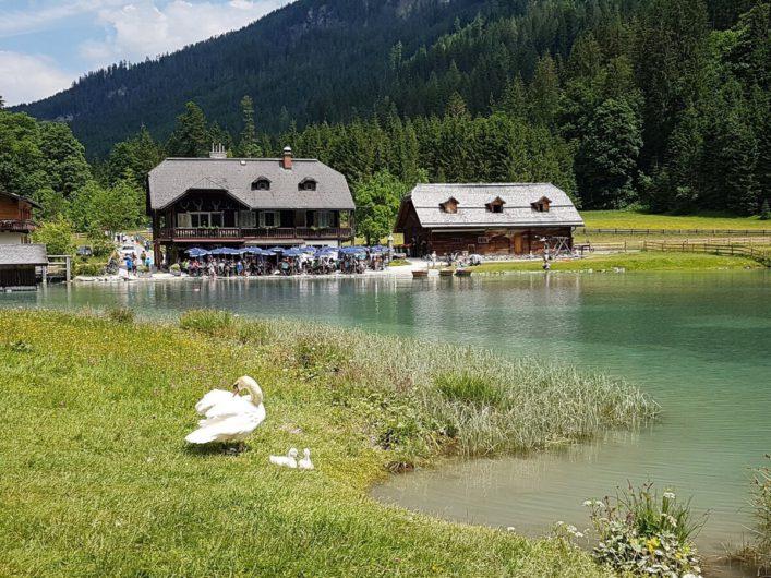 Gasthof Jägersee und Schwan mit Jungen direkt am Jägersee im Salzburger Land