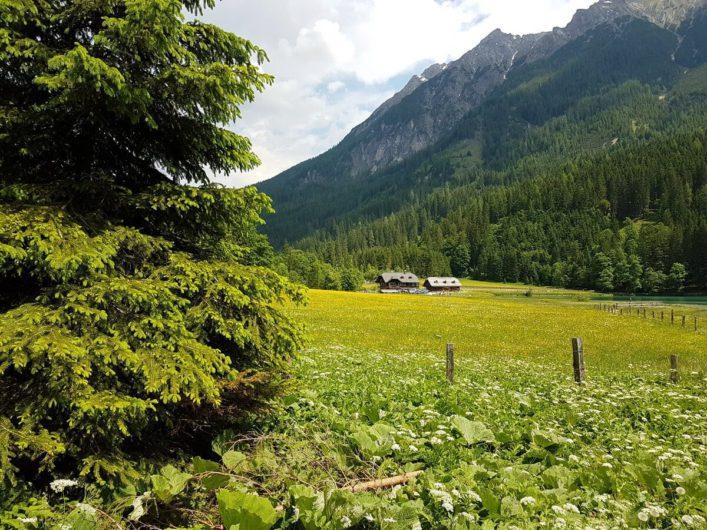 Weg durch blühende Wiesen am Jägersee