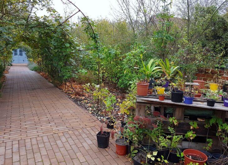 Rosengang im Garten der D8 in Havelberg