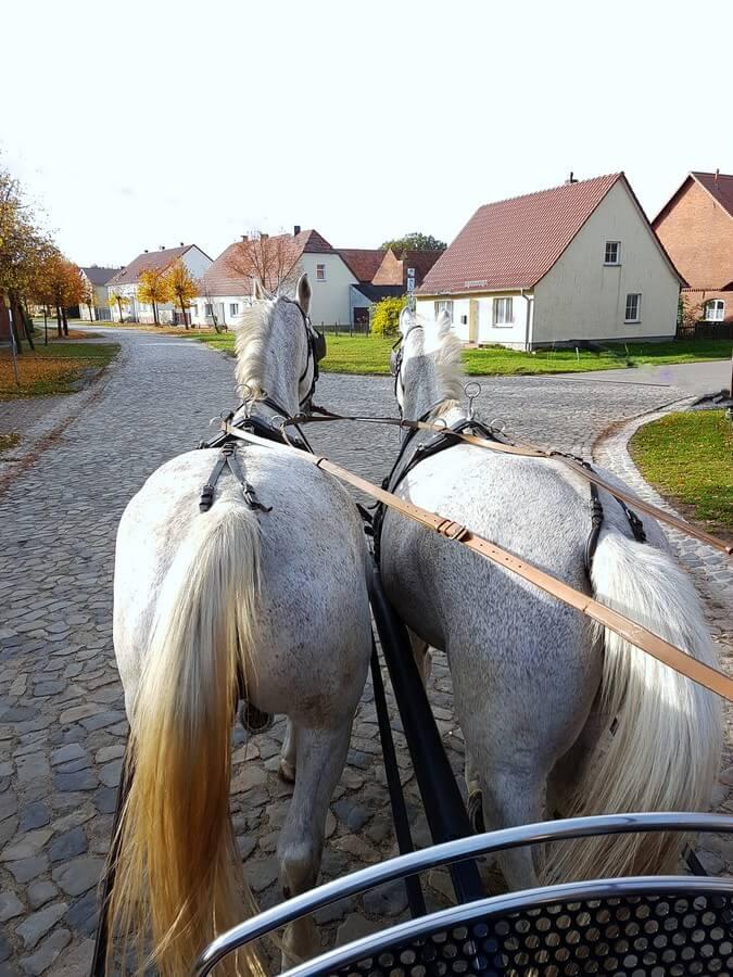 mit der Kutsche auf der Dorfstraße von Neuermark-Lübars im Elb-Havel-Winkel