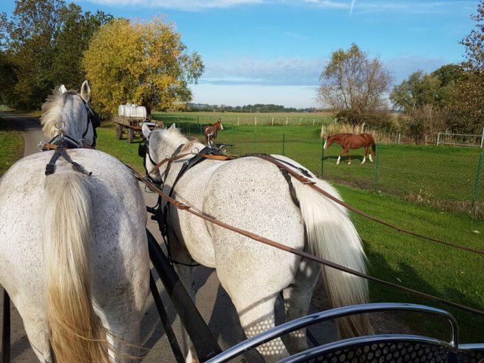 unterwegs zwischen Wiesen in der Altmark mit der Kutsche