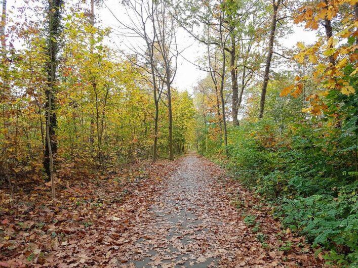 Fahrt mit dem Rad durch den Wald beim Ausflug im Seenland Oder-Spree