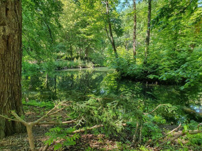 Wasserlauf im Großen Tiergarten Berlin