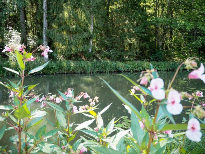 Blumen am Ludwig-Donau-Main-Kanal