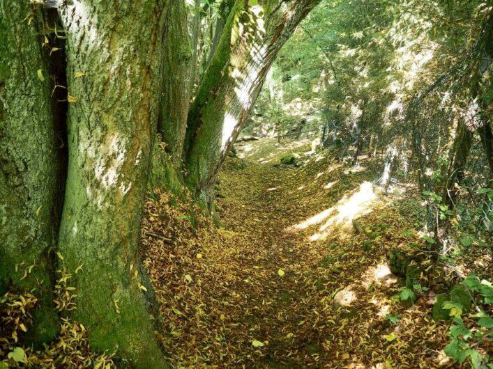 Waldweg des Wallenstein Rundwegs