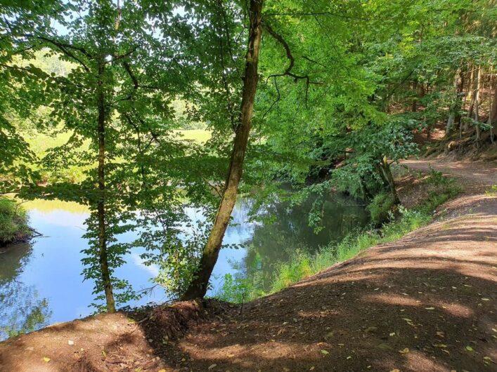 Bäume am Ufer der Schwarzach im Nürnberger Land
