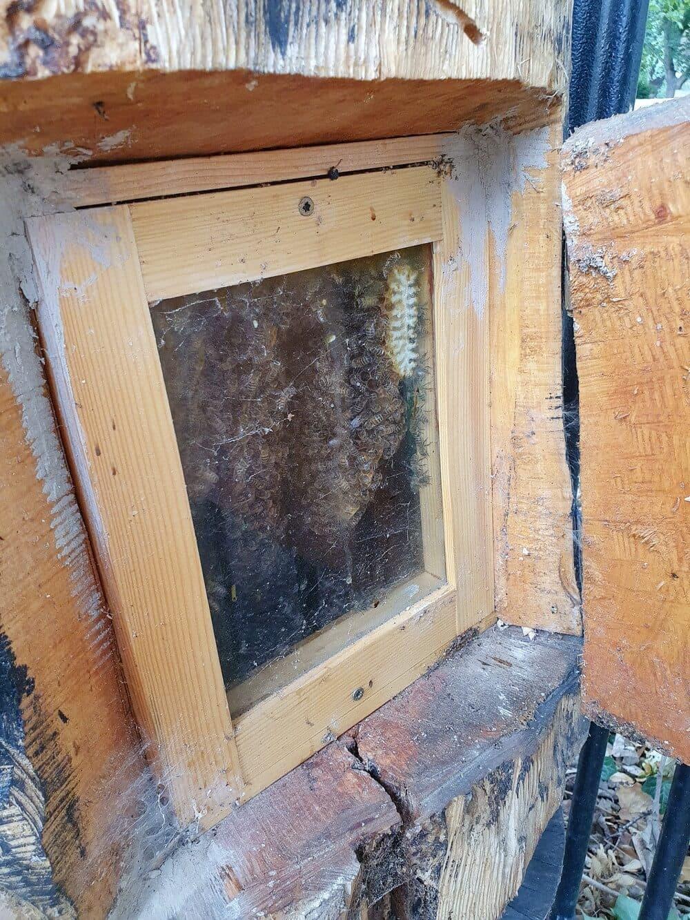 Bienenstock hinter dem Petrikloster