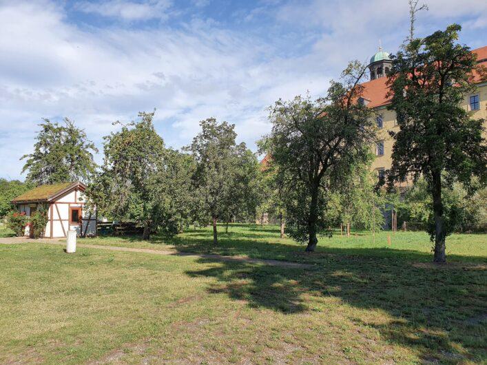 Streuobstwiese im Obstgarten des Zeitzer Schlossparks