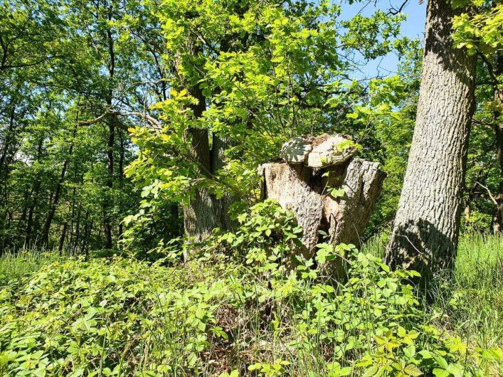 Baumstumpf am Wegrand