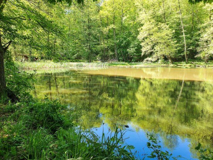 Teich in Falkenberg