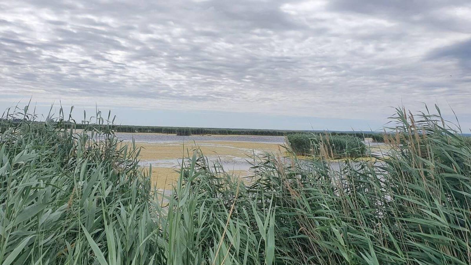 Blick über den Schilfgürtel auf den Neusiedler See
