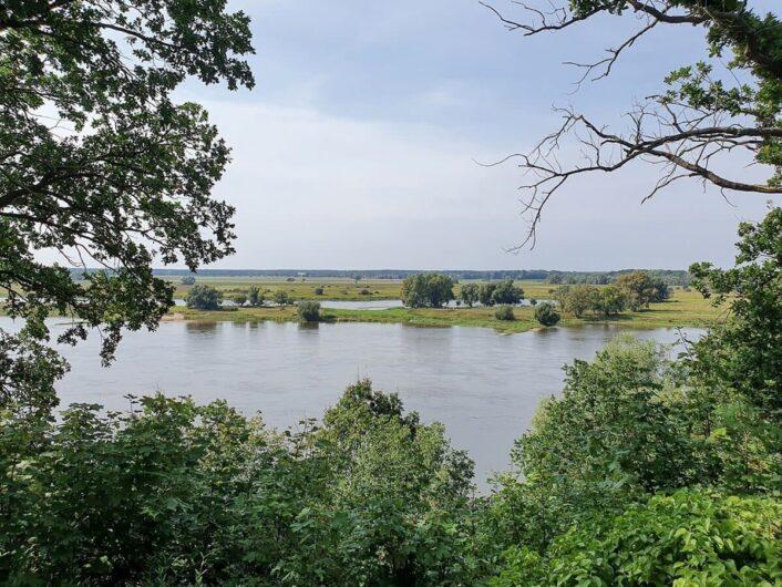 Blick durch das Grün der Bäume auf die Elbe