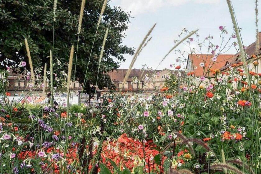 Blumen und Gräser und Gebäude der Buga 2021 im Hintergrund