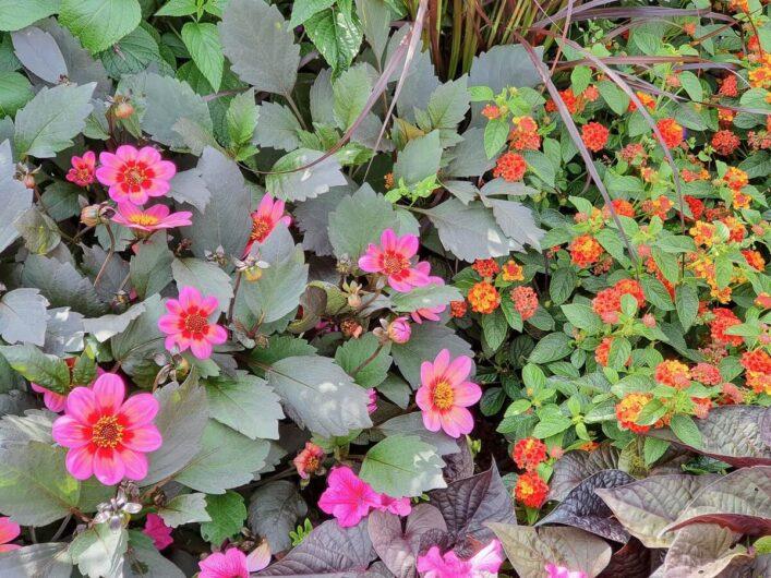 Blüten in pink und orange