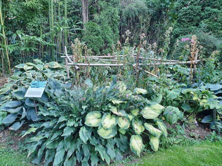 Blick auf den Nutzgarten von Bella Bayer